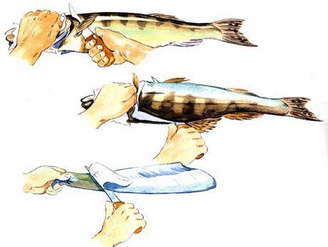 Инструкция по разделыванию рыбы