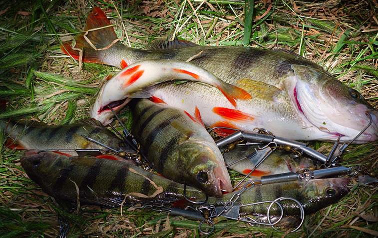 После выбора сорта рыбы, можно приступать к копчению